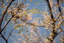 ふたつめの花