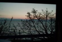 3月31日、桜の木の下の前に、お会いしませんか。