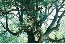 町田 周二 | 雑木林と8つの家プロジェクト