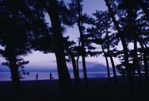 立山 芳輝 | くすの木自然館