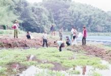 秋の芋掘り会と、芋煮会 ~福島編~