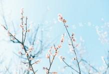 春のお花見