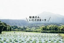 桜島さん、いただきまーす。
